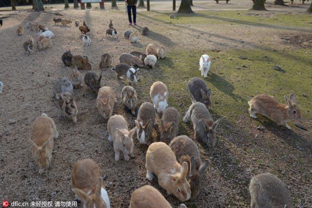rabbits animals
