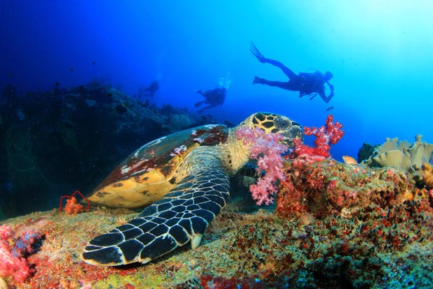 Amazing Dives, diving