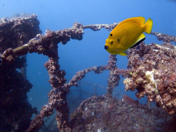Yongala Australia, Amazing Dives, diving