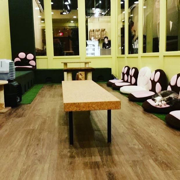 Tot The Cat Cafe Toronto