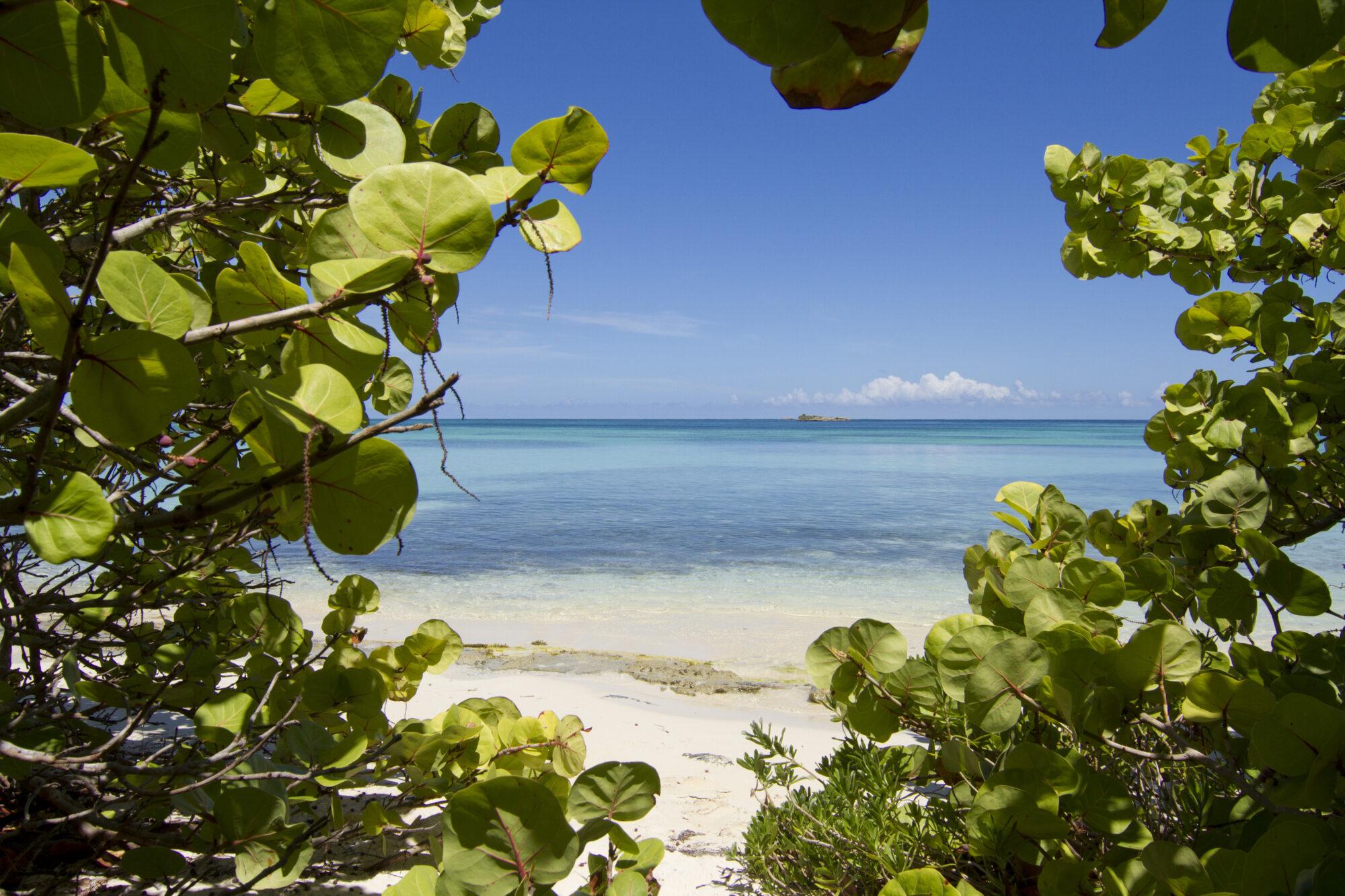 sneak-peek-at-green-island1