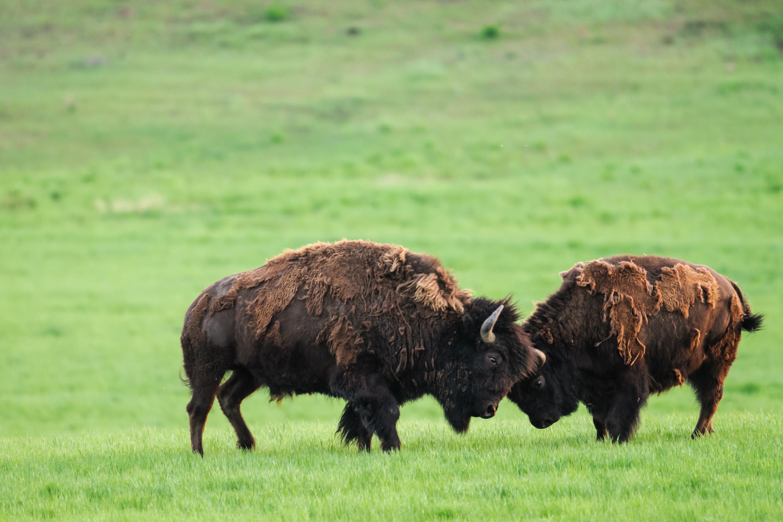 Canada 150 Grasslands National Park