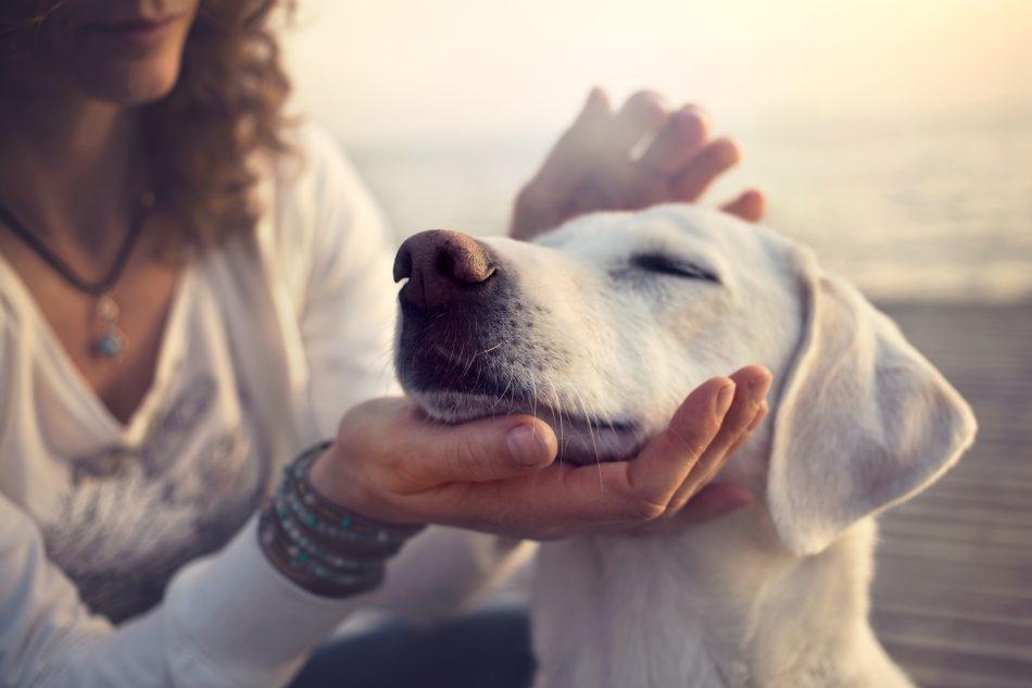 content dog Netherlands