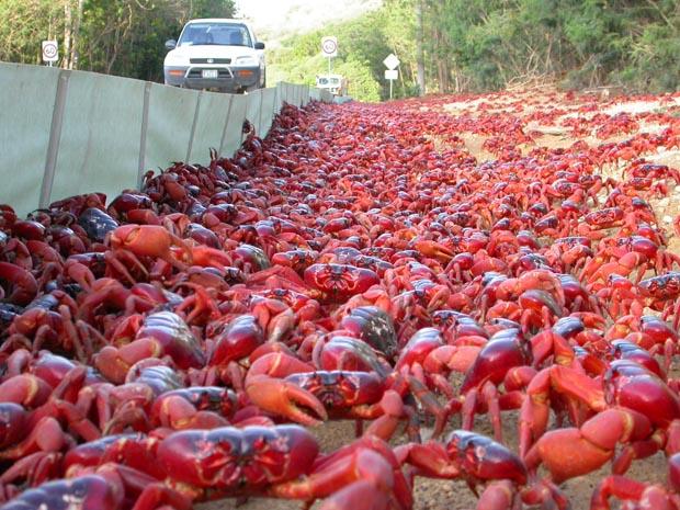 crabs, animals