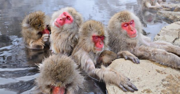 Image of 7 Fantastic Hot Springs From Around The World (One Has Monkeys!!!)