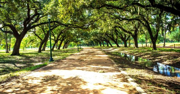 Image of The Healing Power Of 'Forest Bathing': What It Is & The Best Places To Do It In Houston