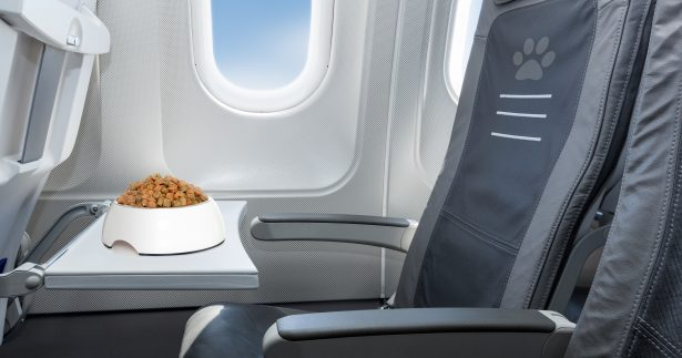 Image of Plane Food: Why Is It So Bad And Can We Do Anything?